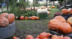 The Charming Pumpkin Festival In Iowa That Will Make Your Fall Complete