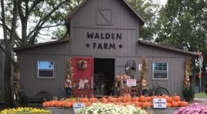The Farm Near Nashville That Transforms Into A Halloween Wonderland Each Year
