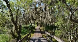 The Magnificent Bridge Trail In Louisiana That Will Lead You To A Hidden Overlook
