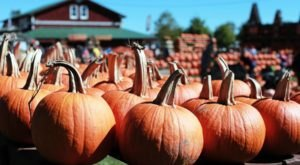 Plan Your Trip To The Best Pumpkin-Themed Destination In The Buffalo Area