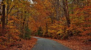This 2-Hour Drive Through Maryland Is The Best Way To See This Year's Fall Colors