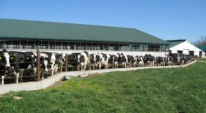 The 100-Acre Dairy Farm In Ohio That Will Delight You Beyond Words