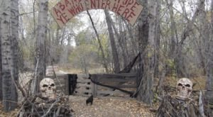 Take A Walk Through This Haunted Forest In Idaho For The Scariest Time Of Your Life