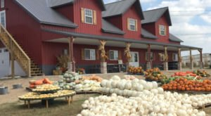 These 8 Pumpkin Patches In Kansas Are Oodles Of Fun