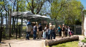 Not Many People Know About This Wild Cat Sanctuary Right Here In Kansas