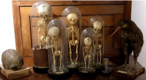 The Creepiest Museum In The Country Can Be Found Right Here In Kentucky