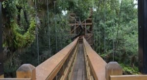 This Canopy Walkway Takes You High Above The Florida Trees Like Never Before