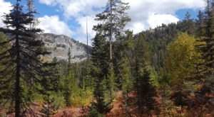 This Magical Hike Through An Idaho Forest Is Unexpectedly Colorful