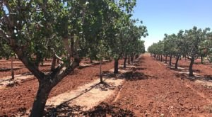 You'll Want To Visit The Quaint Pistachio Farm In The Heart Of The New Mexico Desert