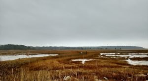 The 5-Mile Connecticut Wetlands Hike That's Best To Take In The Fall