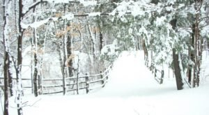 The Easy 1-Mile Winter Hike In Buffalo That's Positively Bewitching