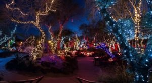 This Cactus Garden In Nevada Transforms Into The Most Dazzling Light Display Every Year