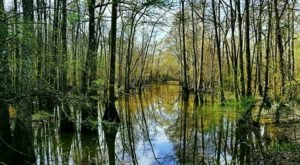 The 1,200-Acre State Park Near New Orleans That Stands Out From The Rest