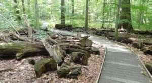 Hike This Ancient Forest In Ohio That's Home To 400-Year-Old Trees