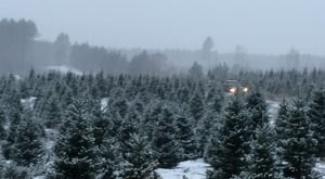 The Christmas Tree Barn In Minnesota That Will Light Up Your Holiday Season