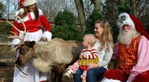 The Reindeer Festival In Kentucky That Will Positively Enchant You This Season
