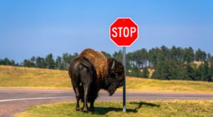 10 Incredible, Almost Unbelievable Facts About South Dakota