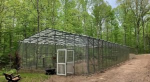 Plan Your Visit To This Amazing Tropical Parrot Sanctuary In Virginia As Soon As You Can