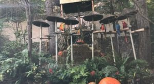 Plan Your Visit To This Amazing Tropical Parrot Sanctuary In Tennessee As Soon As You Can