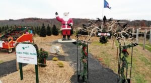 You'll Want To Visit This Gigantic Christmas Farm In Connecticut With 100 Acres Of Trees