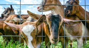 The Barn Yard Animal Encounters At This Indiana Farm Will Warm Your Heart