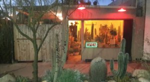 The One Of A Kind Store In Southern California Devoted Entirely To Cacti