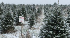 You'll Never Want To Leave This Enchanting Christmas Tree Farm In Virginia