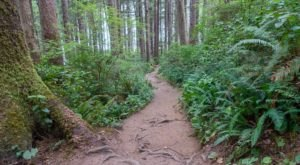 Hike This Ancient Forest In Oregon That's Home To Hundred-Year-Old Trees
