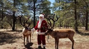 Get Into The Holiday Spirit At This Unique Reindeer Farm In Arizona