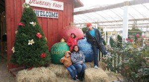 This Christmas Farm In Texas Is An Annual Must-Do