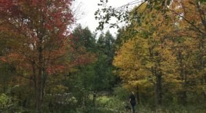 The Scenic Poetry Trail In Vermont You Need To Take This Fall