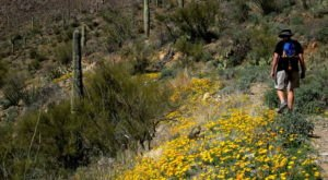 The Cactus Trail In The U.S. That Will Quickly Become Your Favorite Hike Ever