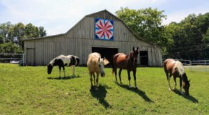 Take A Drive Through Rural Alabama To Experience This Colorful Barn Quilt Trail