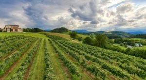 6 Tennessee Wine Trails Everyone Should Take At Least Once