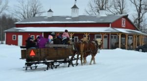 This 30-Minute Buffalo Sleigh Ride Takes You Through A Winter Wonderland