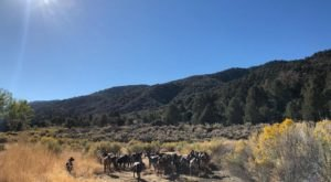 Go Hiking With Goats In Southern California For An Adventure Unlike Any Other