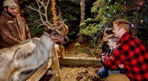 The Magical Christmas Reindeer Village In Massachusetts Where Everyone Is A Kid Again