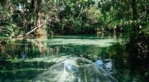 Take These Glass-Bottom Kayaks Out For An Adventure Unlike Any Other In Florida