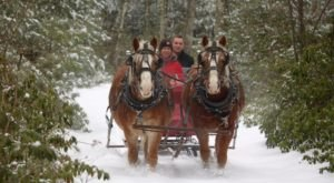Enjoy A 30-Minute Sleigh Ride Through A Winter Wonderland At Cornerstone Ranch In Massachusetts