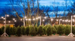 These 5 Christmas Tree Farms Near Nashville Are Absolutely Magical