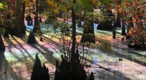 This Natural Phenomenon Happening In One Of Virginia's State Parks Is Too Beautiful For Words
