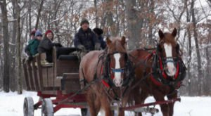 Enjoy A 60-Minute Sleigh Ride Through A Winter Wonderland At Cyclin-Inn In Minnesota