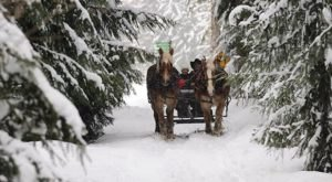 This 45-Minute Arizona Sleigh Ride Takes You Through A Winter Wonderland