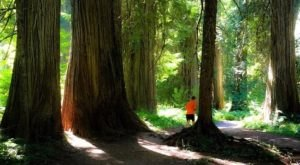 Hike This Ancient Forest In Montana That's Home To 400-Year-Old Trees