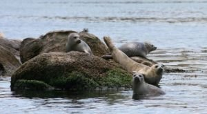 The One-Of-A-Kind Seal Watching Cruise In Connecticut That Is Pure Magic