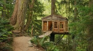 This Treehouse Resort In Washington May Just Be Your New Favorite Destination