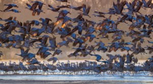 See More Than 600,000 Sandhill Cranes At This Incredible Nature Preserve In The U.S.