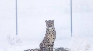 You Can Watch Rare Animals Play In A Winter Wonderland At This Zoo In Nevada