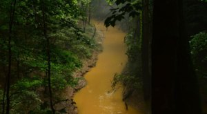 The Jungle-Like Area Of Kentucky That You Have To Experience For Yourself