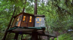 This Treehouse Accommodation In The Redwood Forest Is The Definition Of A Dreamy Getaway